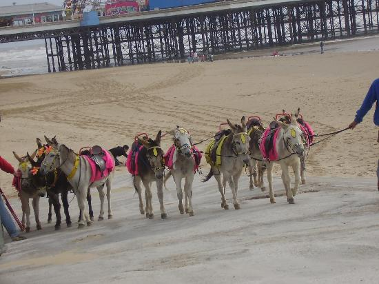 The Wembley: the donkeys after a hard days work bless