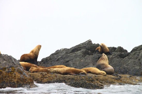 "Harvey House B&B: excursion a partir de Tofino: ""sea lions"""