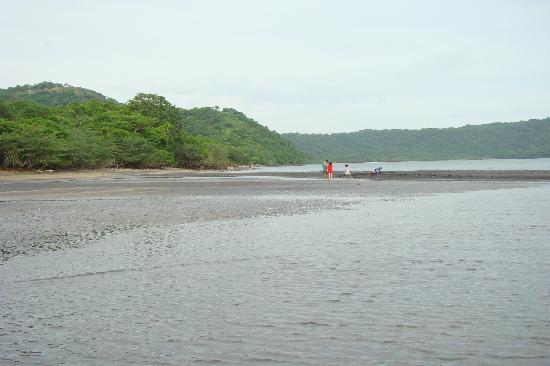 Allegro Papagayo: Playa de arena negra, manglar