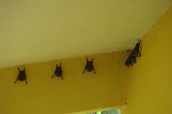 Allegro Papagayo: Murcielagos en  la habitacion