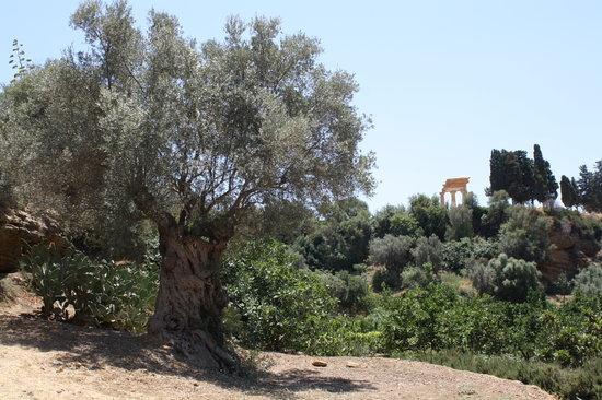 Il Giardino della Kolymbethra