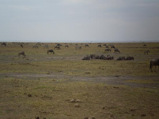Crystal Bay Resort: Amboseli National Park