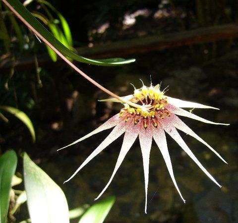 Kota Kinabalu, Maleisië: Taken At Orchid De Villa
