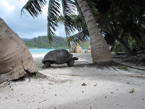 Curieuse Island: Promenade à Curieuse