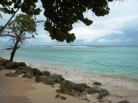 Tobago, WI