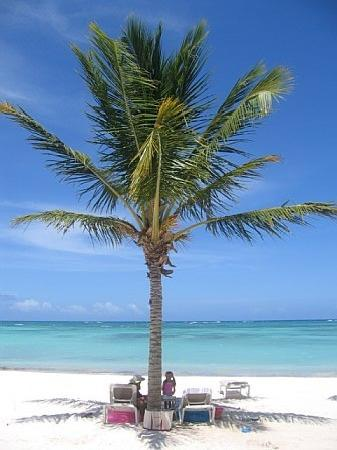 Tortuga Bay, Puntacana Resort & Club: *OUR* palm that we sat under every day!