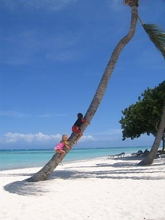 Tortuga Bay, Puntacana Resort & Club: kids climbing nearby palm tree!