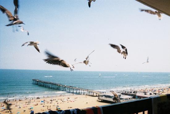 Virginia Beach Boardwalk: Seagulls from the Balcony