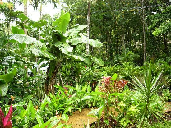 Das schlafzimmer picture of au jardin des colibris for Au jardin tropical guadeloupe
