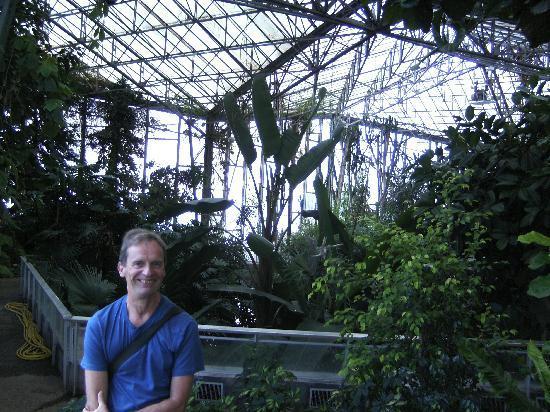 NordHotel Citotel: palmery