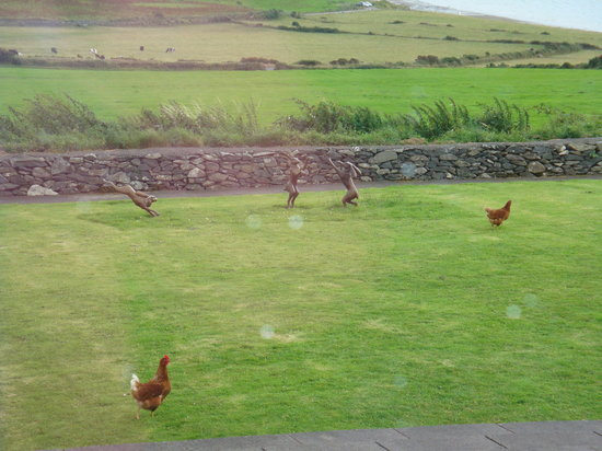 Pax Guest House : Chickens in the yard mean fresh eggs for breakfast