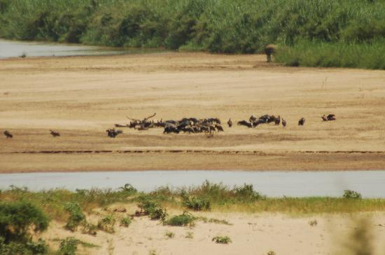 Umfolozi, South Africa: see the rhino between the reeds in the background