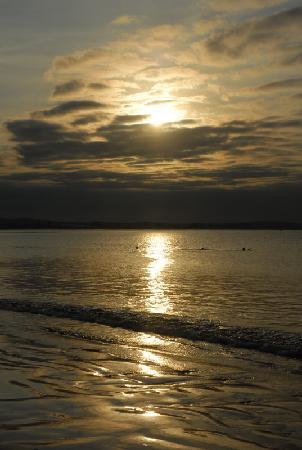 Martin Pescador : Sunset on the bay