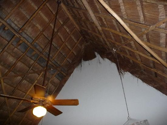 Hotel Hacienda Uxmal Plantation & Museum: Thatch roof lets in varmints.