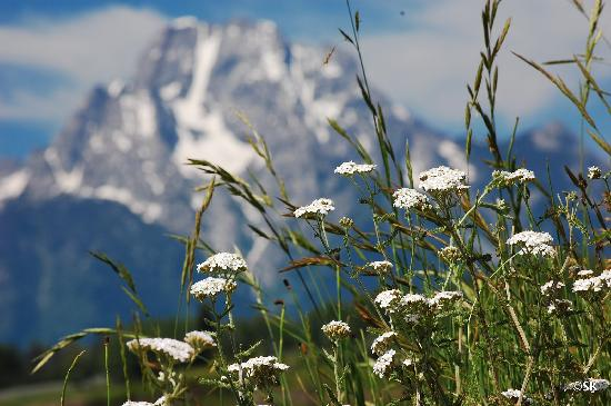 flowers at oxbow bend