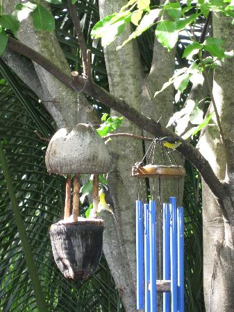 Garden by the Sea B&B: Bird Feeder