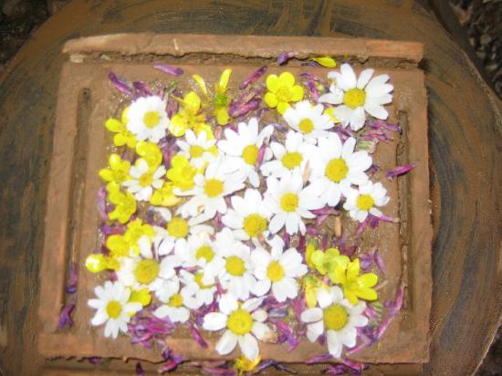 Pastoral Vadi Ecologic Life Farm: MAD CAKE