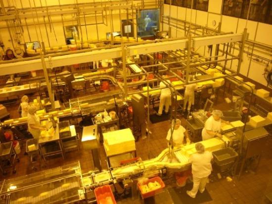 ติลลามุก, ออริกอน: Interesting process of making packaging cheese, but I was more interested in the free samples!