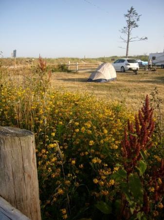 ติลลามุก, ออริกอน: Cape Lookout Park, Aug 2009 With the Canadian Lams.