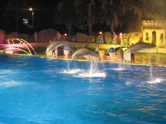 CAMPING du PYLONE: Dolphins at the night show in Marinland