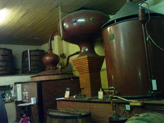 Marennes, França: Una destileria de Cognac donde fuimos a probar delicias cognacs añejos de hasta 17 años...!