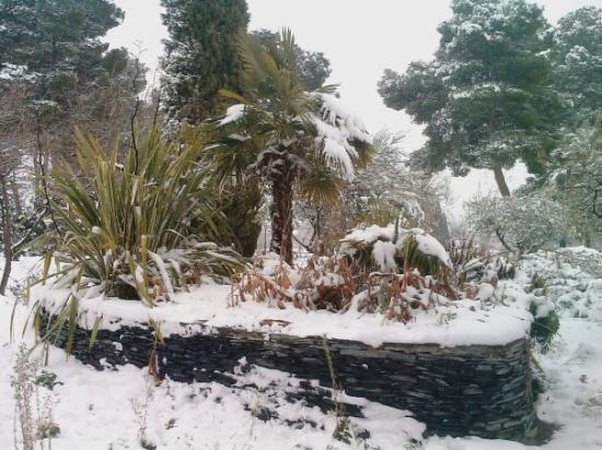 Azuqueca, إسبانيا: Palmeras