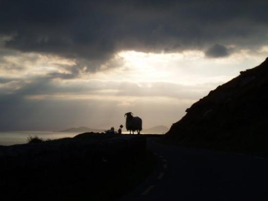 ดิงเกิล, ไอร์แลนด์: Ring of Kerry - Out 2007