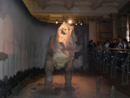 พิพิธภัณฑ์ประวัติศาสตร์ธรรมชาติ: Natural History Museum bojíte se? asi ne? ale tam ten rexík řval a vrtěl ocasem, to bylo taaak