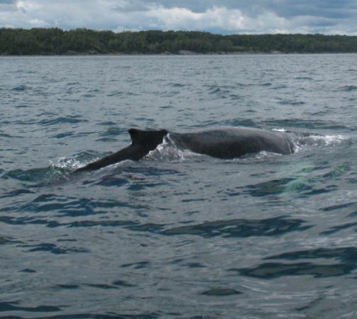 Elle a pass sous notre bateau picture of tadoussac for Auberge maison hovington