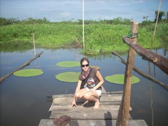 Iquitos, Pérou : Victoria  Regia