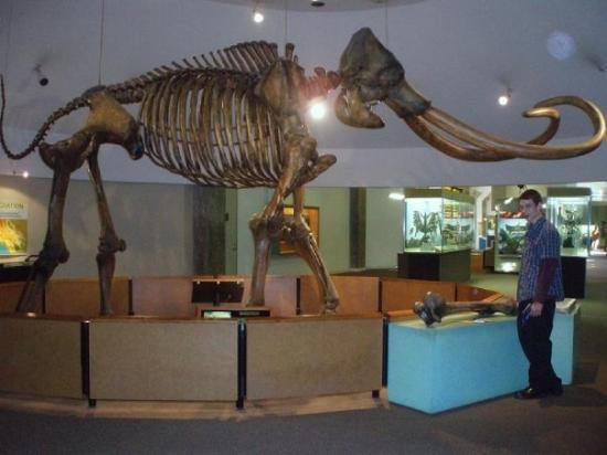 La Brea Tar Pits and Museum ภาพถ่าย
