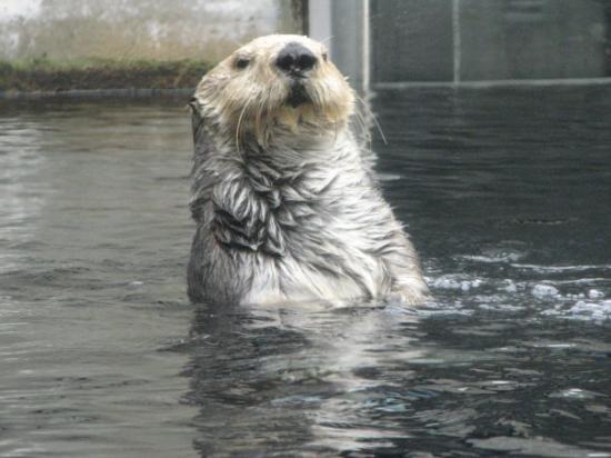 Monterey Bay Aquarium: Hello, my name is Tulla!