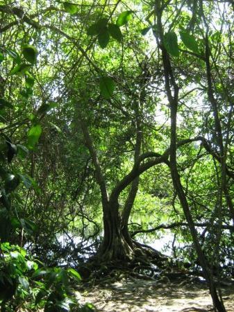 Cahuita (Caribbean)