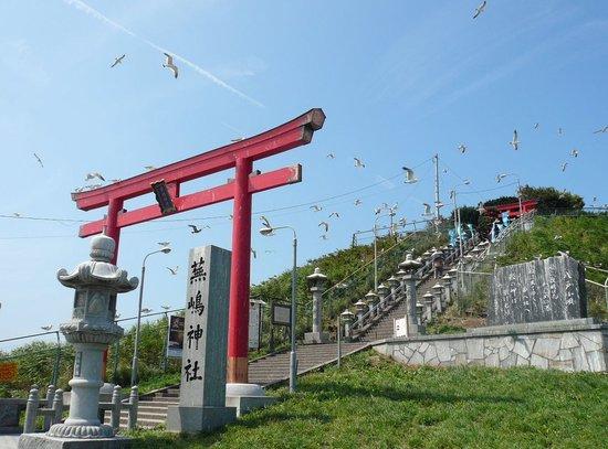 Hachinohe, Japón: ウミネコがお出迎え