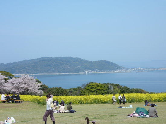 Fukuoka, Japonya: 桜と菜の花と春の海