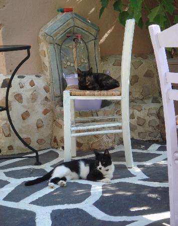 "Hotel Attiki: Mimma & Nina ""gatti Attiki"""