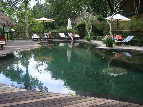 Piscine naturelle picture of nandini bali jungle resort for Piscine naturelle
