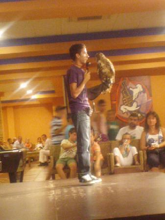 Hotel Best Alcazar: Show de Rapaces