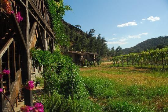 Pastoral Vadi Ecologic Life Farm: AUGUST