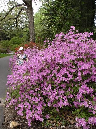 Biltmore: springtime in Ashville