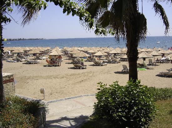 Defne Star Hotel: vue sur la plage