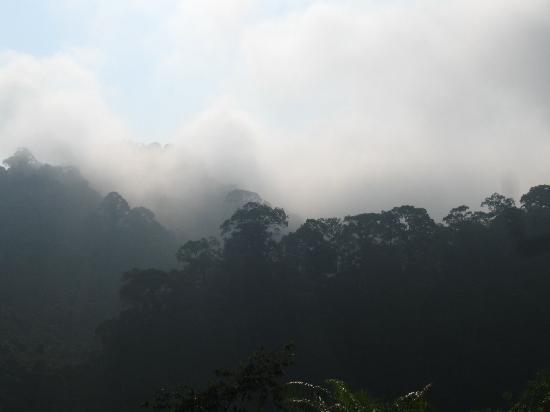The Regency Pelagus Resort: Morning fog
