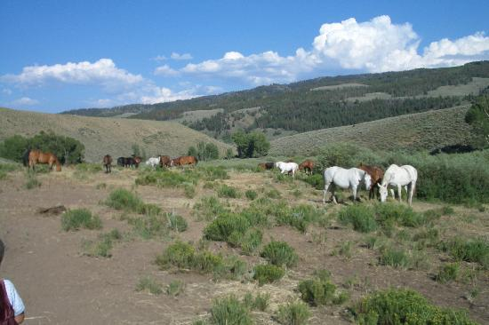 Drowsy Water Ranch: horses on pasture