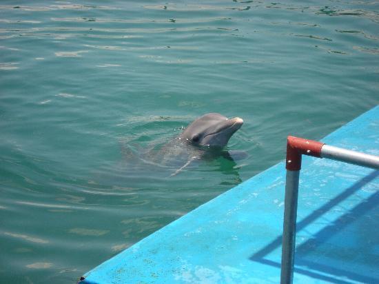 Paradisus Rio de Oro Resort & Spa: Dolphinarium - Well worth a visit