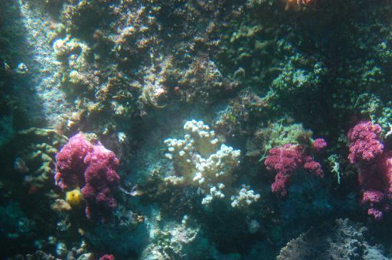 Seaside Toraya: 鹿島での珊瑚