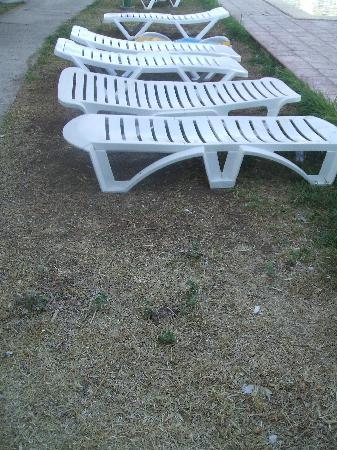 Habitat Garden: Dead grass
