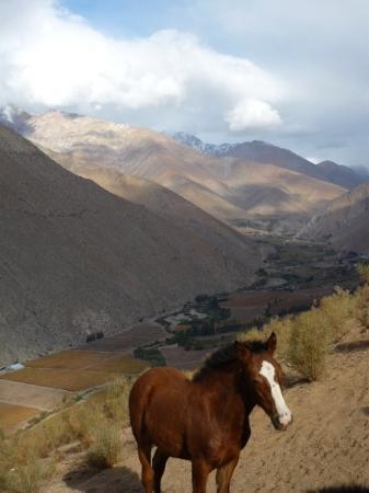 Foto de Pisco Elqui