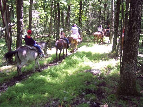 Pocono Adventures Riding Stable: Mules on the trail
