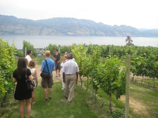 West Kelowna, Canadá: The vineyards at Mission Hill Winery