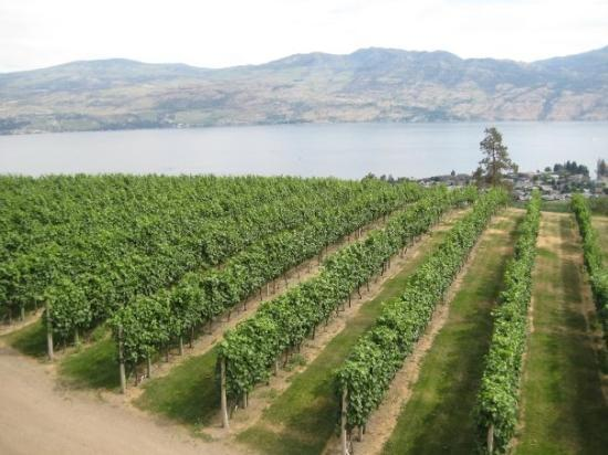 West Kelowna, Canadá: Mission Hill Vineyards